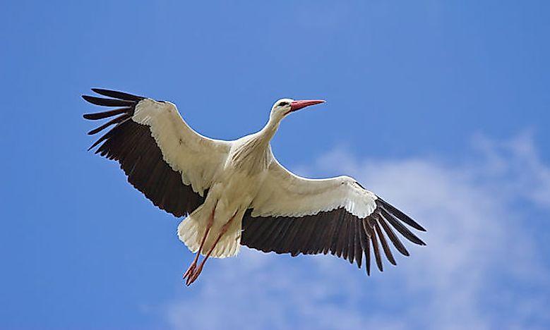 #10 White stork - 16,000 feet