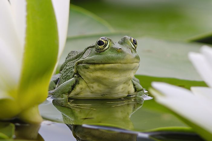 What Is the Difference Between A Frog and a Toad?