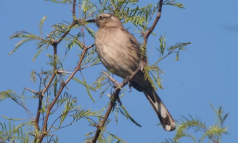 Chile's Endemic Bird Species