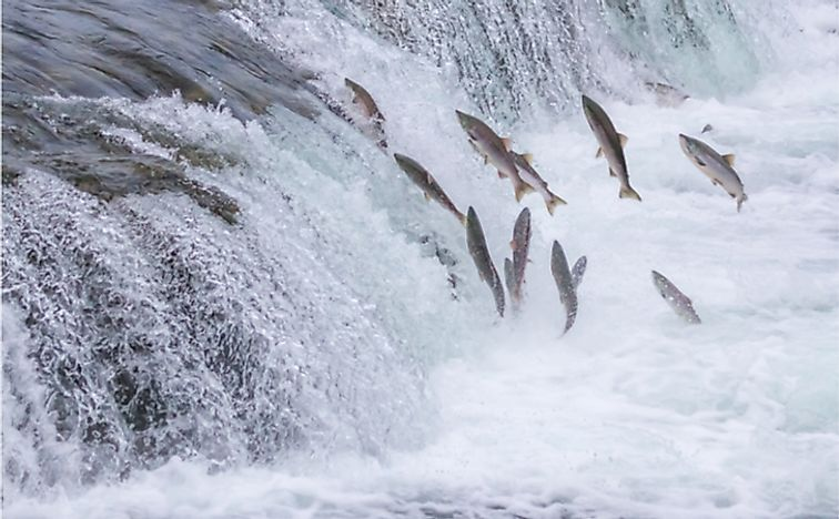 Best Places To See The Salmon Run