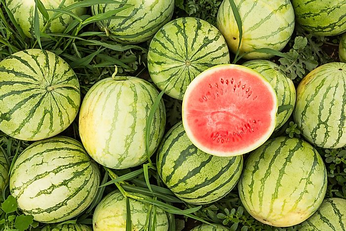 Top Watermelon Producing Countries In The World