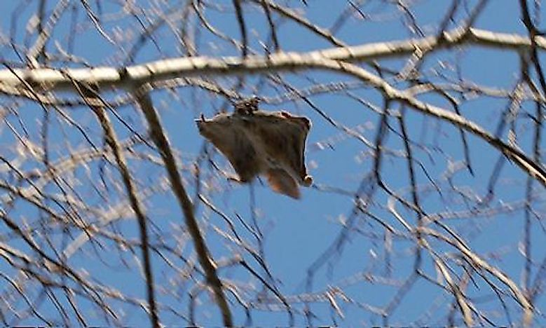 #2 Flying squirrels  -