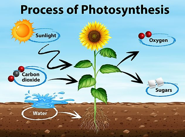 Photosynthesis Explained