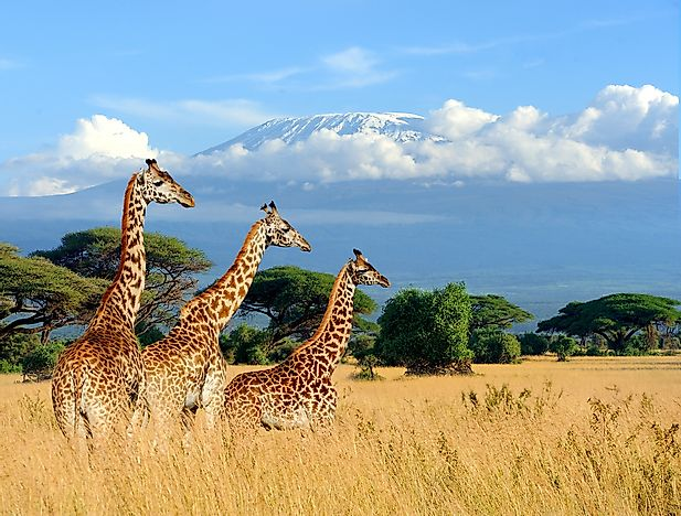 The Spectacular National Parks of Kenya