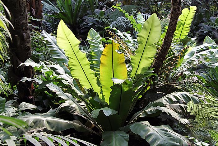 Tropical plants in the Palmengarten, Frankfurt.