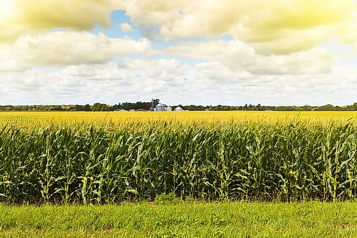 What Region of the United States is Corn Production Prevalent?