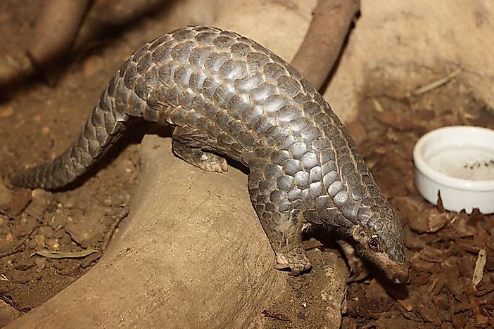 The Illicit Trade Of Pangolins - Source And Destination Countries By Volume Of Seizures