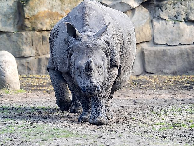 #9 Indian Rhinoceros