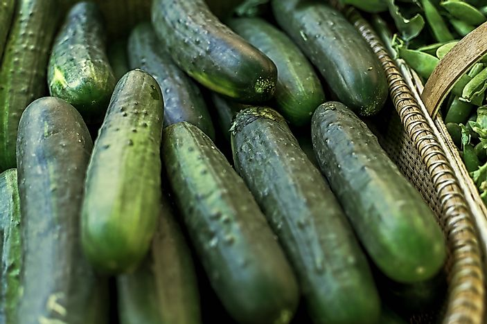 The World Leaders In Cucumber Production