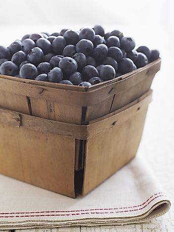 Top 10 Blueberry Producing States In America - WorldAtlas com