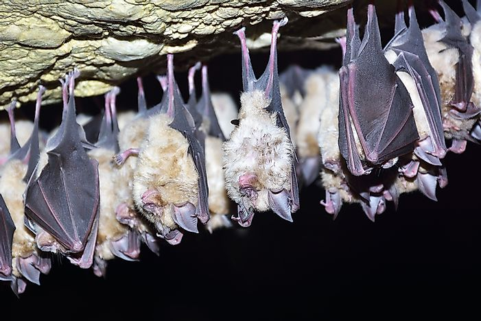 Everything You Need to Know About Bats