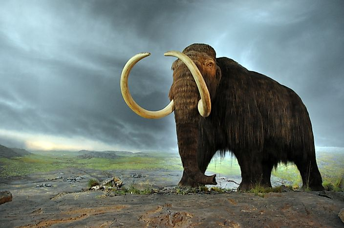 Did Woolly Mammoths Still Roam Parts Of Earth When The Great Pyramids Were Built?