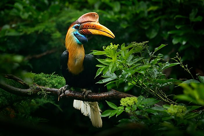 7 Incredible Animals And Birds in Sulawesi, Indonesia