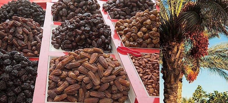 Leading Countries Growing Dates (Fresh Date Palm Fruits