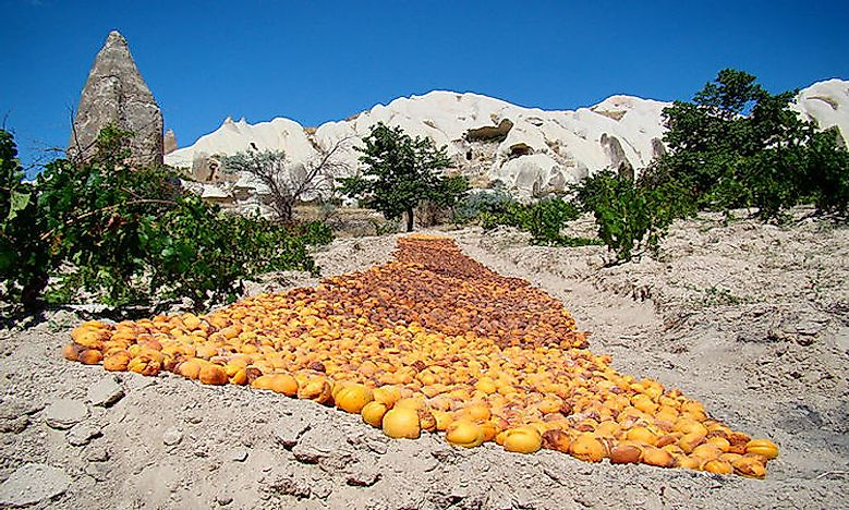 Which Are The World's Top Apricot Producing Countries?