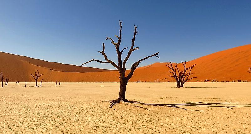 Where Does The Kalahari Desert Lie on Arctic Ecosystem