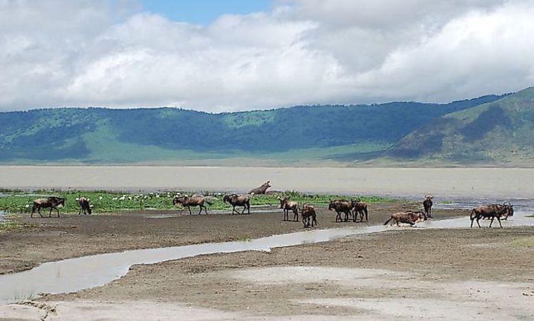 #5 Ngorongoro Crater