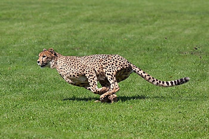The Fastest Mammals In The World