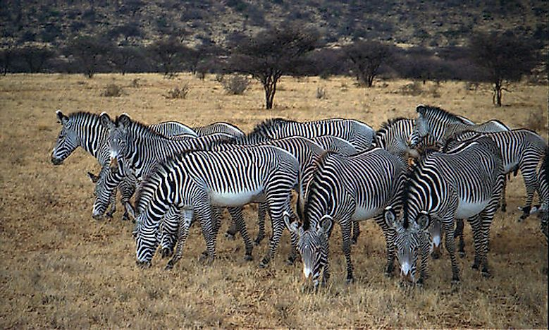 #5 There Are Only 3 Species Of Zebra -