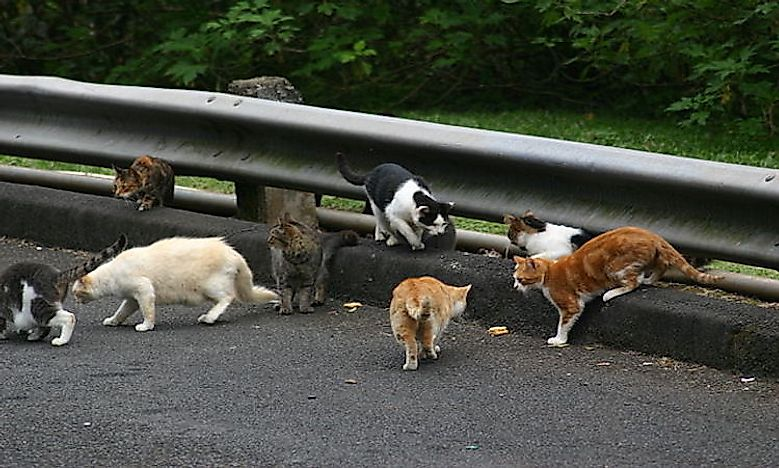 #5 Feral Cats And Dogs