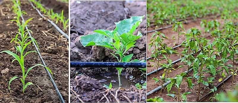 Drip Irrigation And Its Role In Modern Agriculture