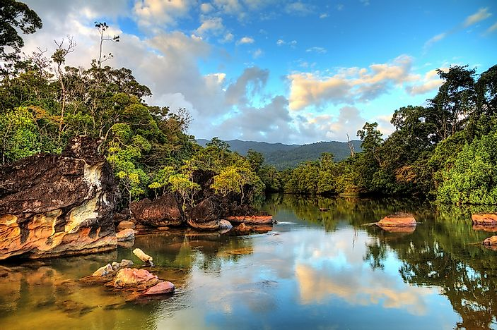 The tropical rainforest of Madagascar.