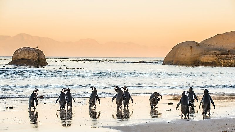 #3 Boulders Beach, South Africa
