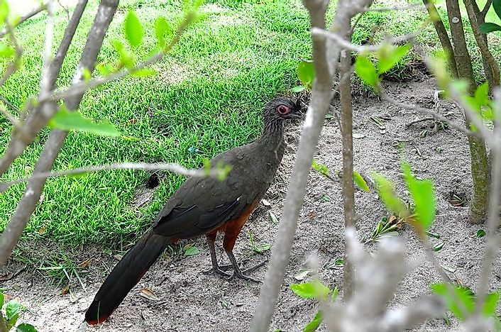Native Birds Of Mexico