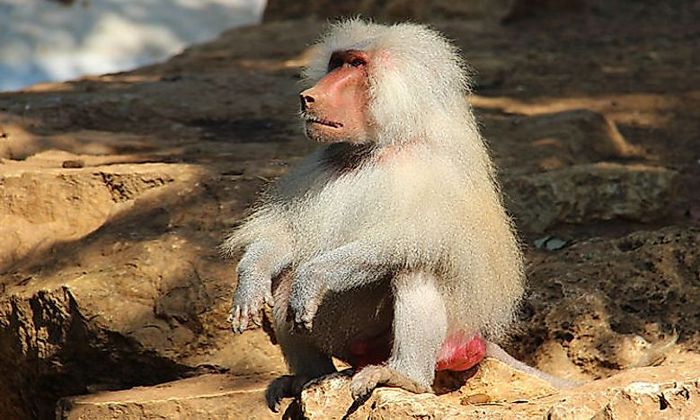 do primates posses culture Do monkeys have orgasms which raises some fairly important questions about how western culture views female sexual agency search the crux see more recent categories archives daylight saving time has a dark side.