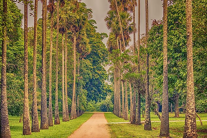 Palm Alley of the Royal Botanical Gardens.