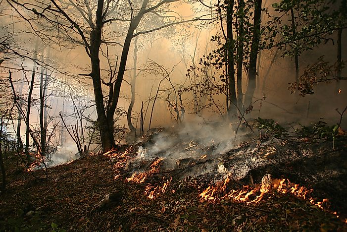 What Are The Differences Between A Ground Fire And A Surface Fire?