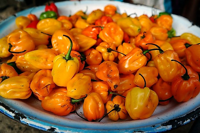 Scotch bonnet peppers from the Gambia, West Africa.