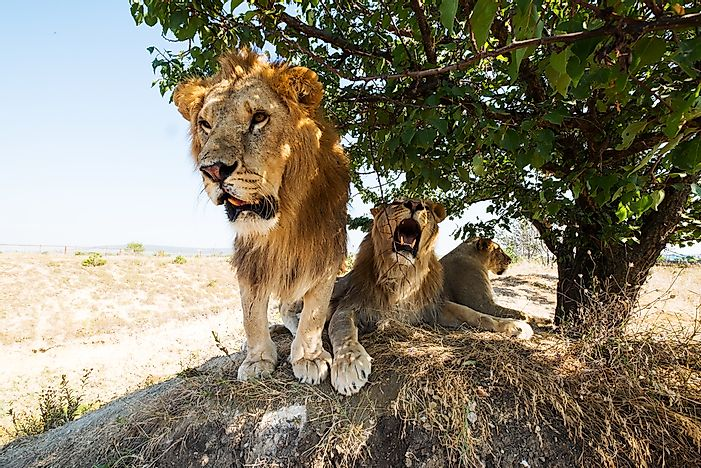 Lions can be found in Burkina Faso.