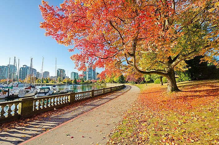 Fall foliage in Stanley Park.