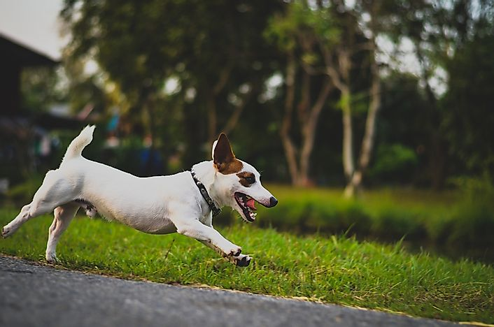 The 15 Fastest Dog Breeds