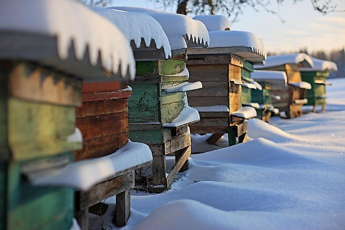 What Do Honeybees Do In The Winter?