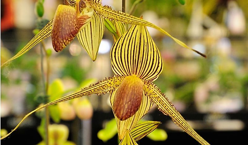 Rarest Flowers In The World , WorldAtlas.com