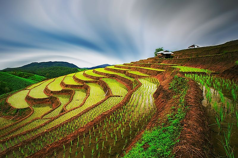 The Mae-Jam rice terraces in Thailand.