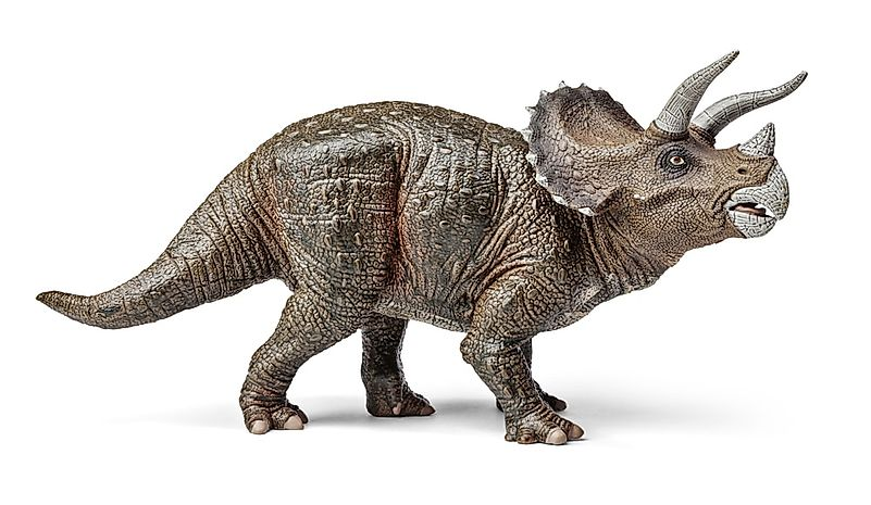 A 3D rendering of a triceratops.