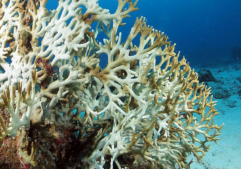 Biggest Threats To Coral Reefs