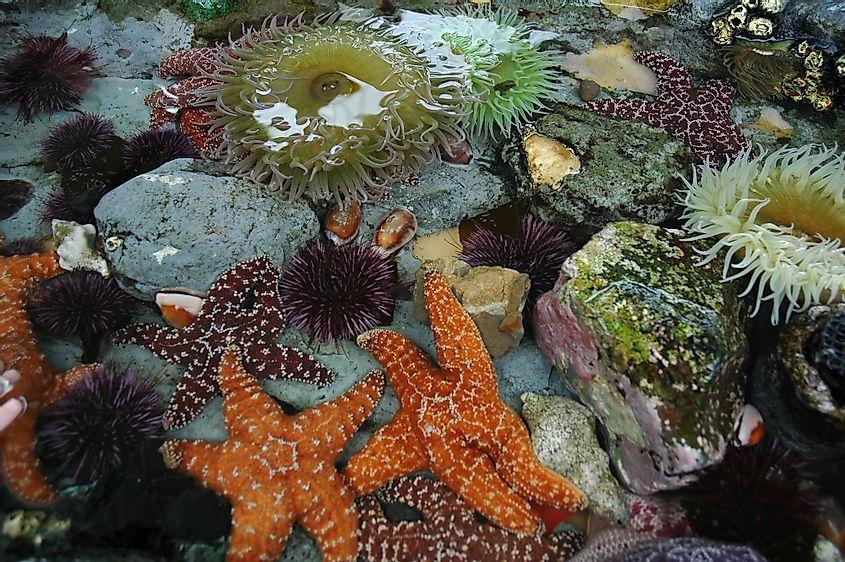 Animal tidal pools