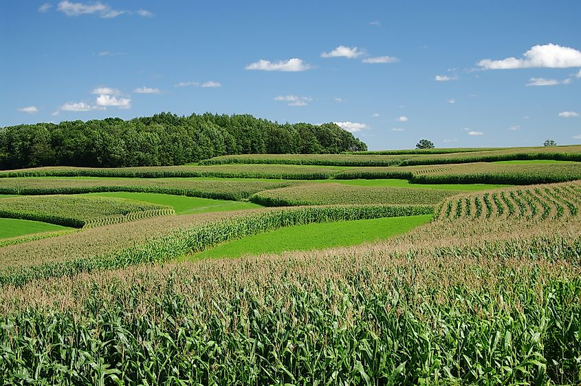 Strip cropping prevents soil erosion and can improve soil fertility.