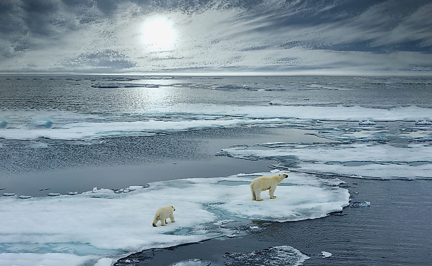Polar bear sow and cub walk on ice floe in Norwegian arctic waters. Image credit: FloridaStock/Shutterstock.com