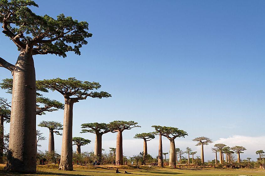 10 Endangered Species of Trees