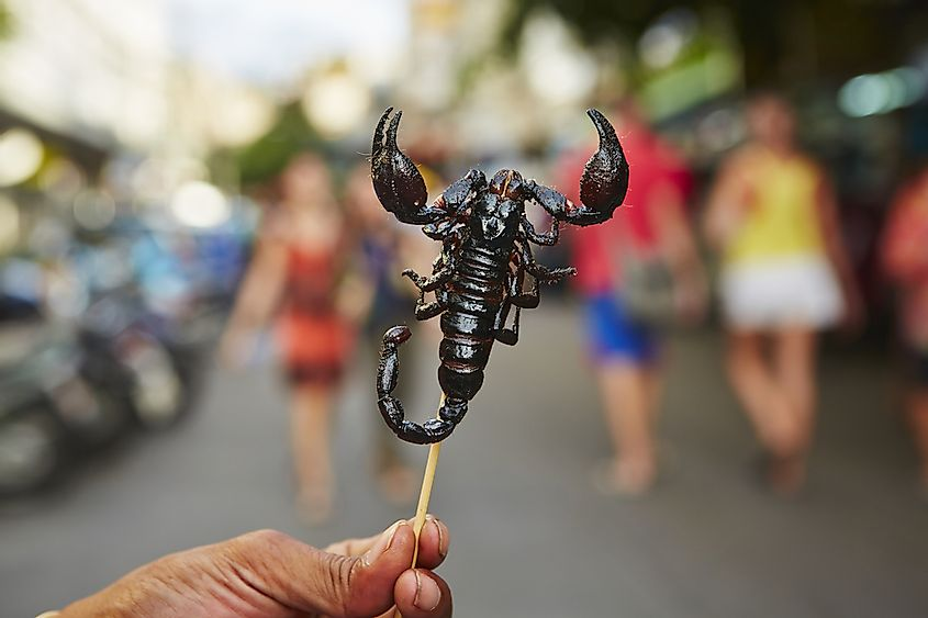Scorpion as a snack