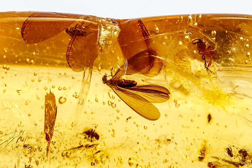 Amber with insects, flies and beetles.