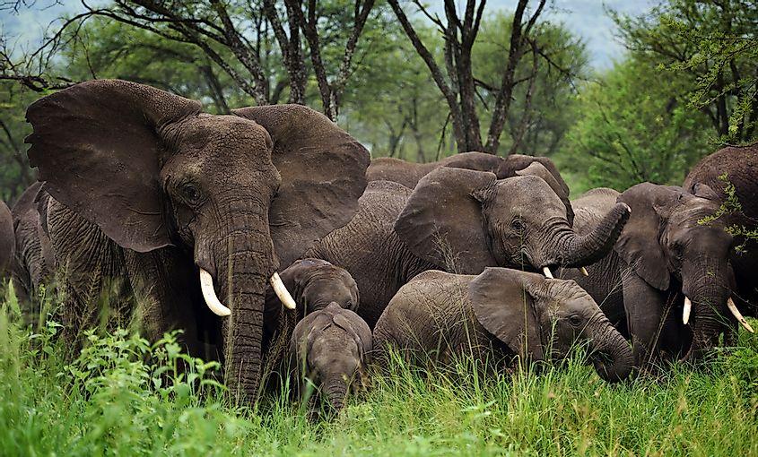 What Animals Live In Groups Worldatlas