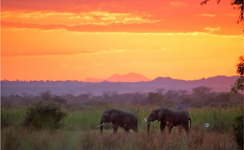 Elephants at sunset in Liwonde National Park. Malawi