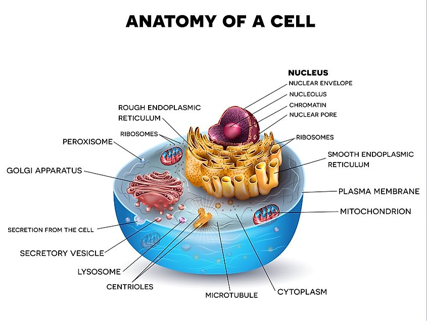 Cell cross section structure.