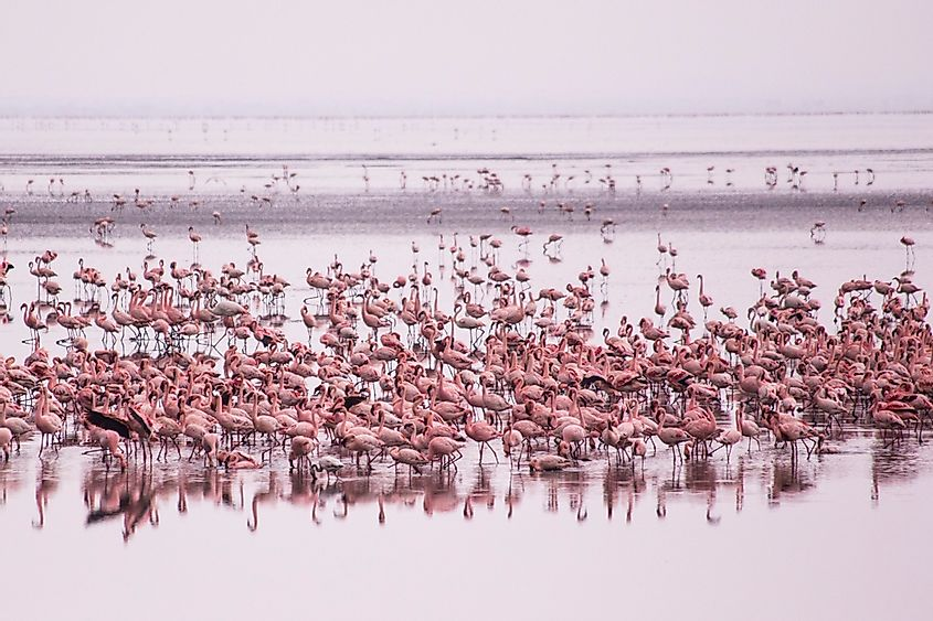 Flamingos aren't the worlds only pink animals!